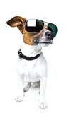 Fototapety Dog with Shades