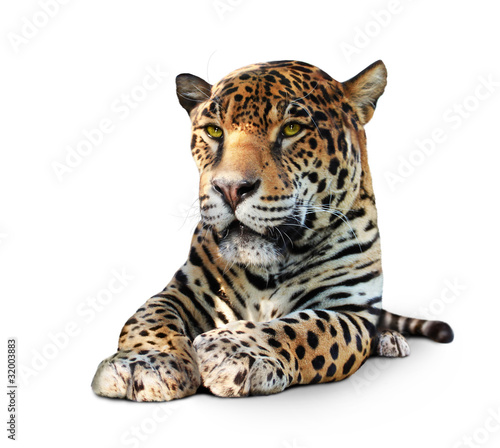 Leinwanddruck Bild Jaguar, Panther, front view, isolated on white, shadow