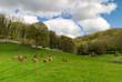 Goats on idyllic meadow