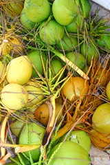 Coconuts fresh crop harvest green and yellow