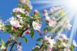 Frühling 174