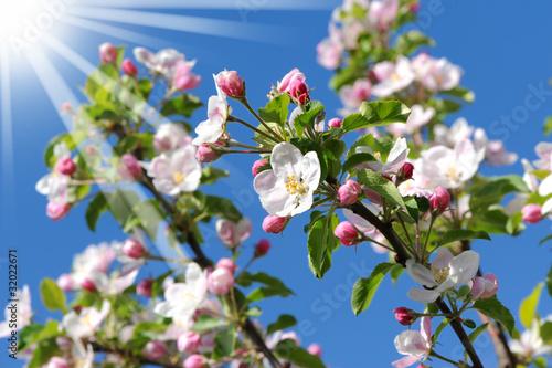 Frühling 175