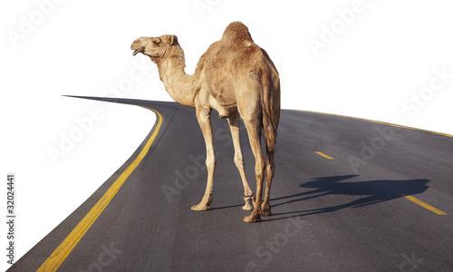 Papiers peints Chameau Camel on the road