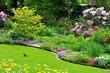 Amsel im Garten