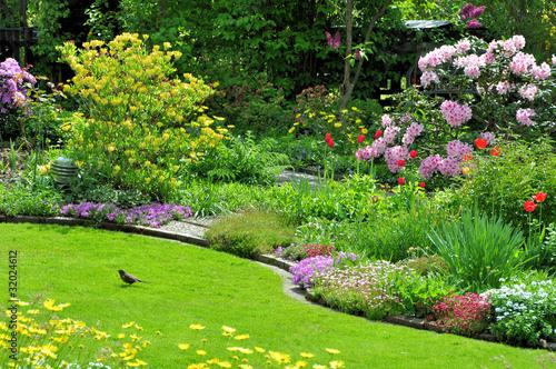 Amsel im Garten - 32024612