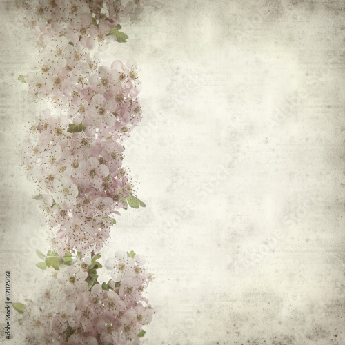 Photo: textured old paper background with hawthorn flowers