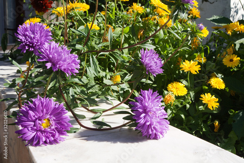 Asters and calendulas near a house