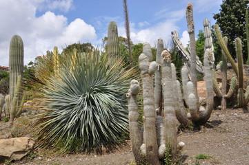 Cactus en Parque de las Palomas. Benlmádena