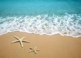 Fototapety starfish on a beach sand
