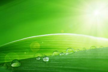 Gouttes d'eau et feuilles vertes