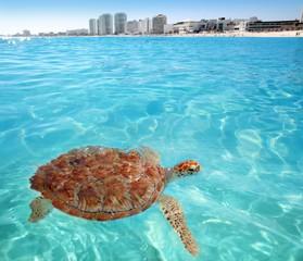 Green sea Turtle Caribbean sea surface Cancun
