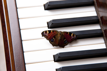 romantic piano with a butterfly