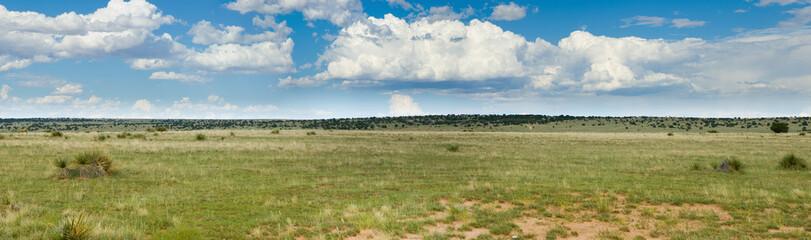 Grassy prairie of Texas - panorama