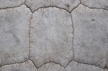 Texture of Old Turtle Shell