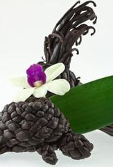 vanille et orchidée