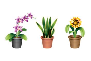 Indoor Office Plants - 2