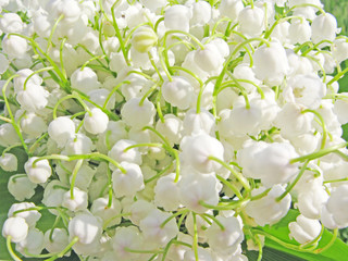 lily of the valley floral background