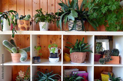 zimmerpflanzen regal von simone werner ney lizenzfreies. Black Bedroom Furniture Sets. Home Design Ideas