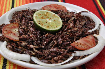"""Roasted grasshoppers """"chapulines"""""""