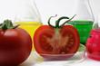 tomaten im labor
