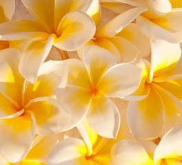 Tapis de fleurs de frangipanier