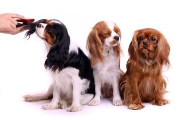 drei sitzende Hunde bei Fellpflege