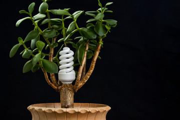 Bioenergetic concept