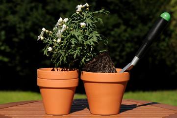 Blume verpflanzen