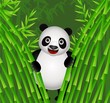 panda in the bamboo forest
