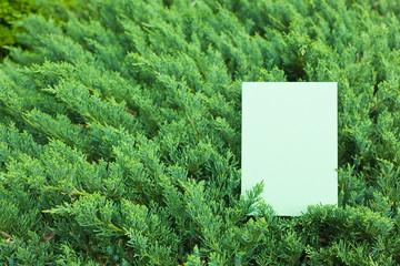 letter[leavesO]_11