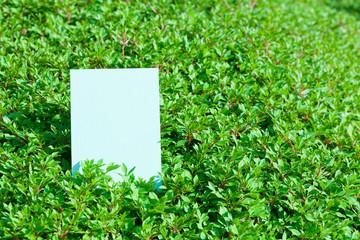 letter[white_enkianthus]_11