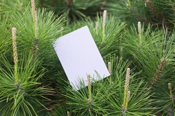 letter[pine]_06