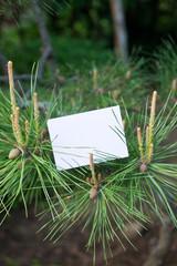 letter[pine]_04