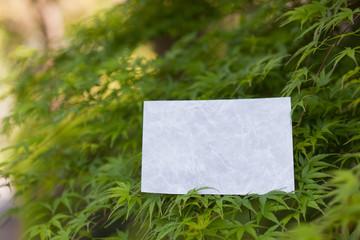 letter[maple]_21