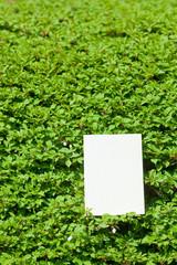 letter[white_enkianthus]_32