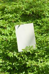 letter[white_enkianthus]_43