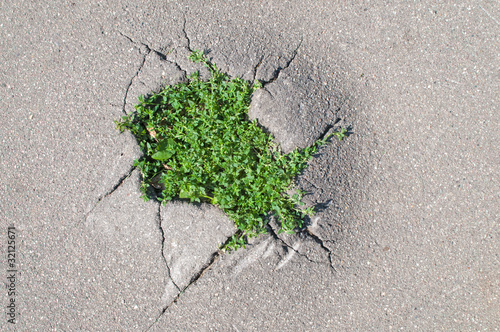young grass sprouted through cracks in asphalt