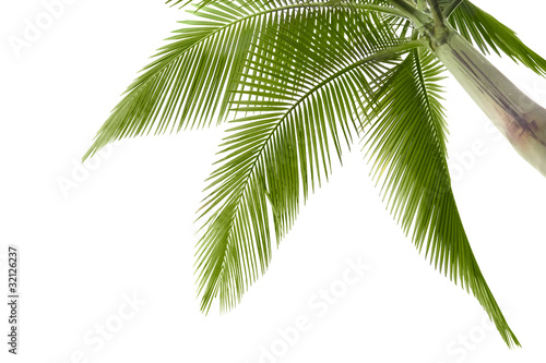 Papiers peints Palmier Palm tree