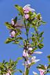 Fleurs de magnolia sur fond de ciel bleu