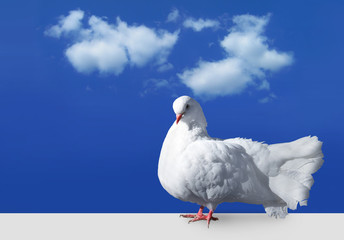 White dove staying against sky with clouds