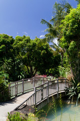 Pont sur le bassin, jardin botanique, Guadeloupe
