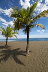 Palmiers et plage