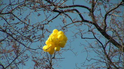 Balloons on a wind