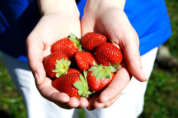 Strawberries in hands photo illustration