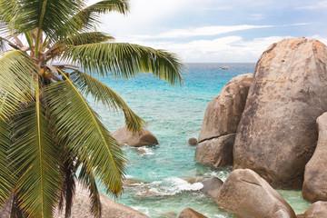 cocotier et blocs granitiques aux Seychelles