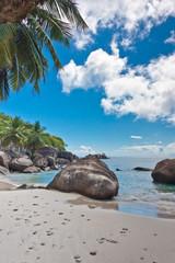 cocotiers des Seychelles