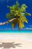 seychelles plage cocotier