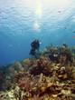 Scuba Diver over a Cayman Island Reef