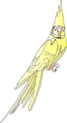 Попугай - Корелла