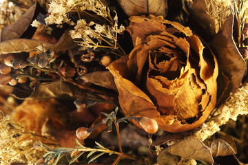 Roses Dried